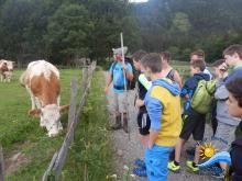 Kühe, die uns täglich die Milch liefern